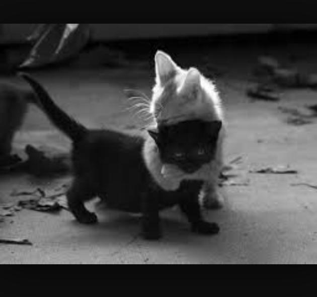 twee kittens