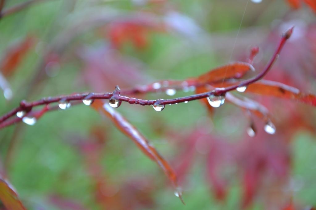 Regendruppels aan een tak